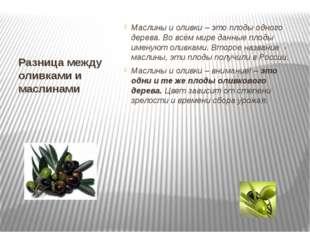 Разница между оливками и маслинами Маслины и оливки – это плоды одного дерева