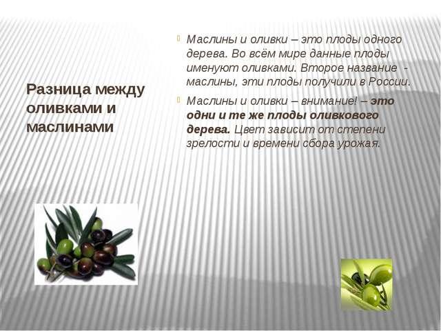 Разница между оливками и маслинами Маслины и оливки – это плоды одного дерева...