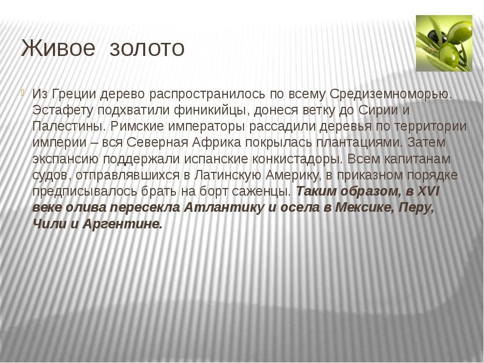 Живое золото Из Греции дерево распространилось по всему Средиземноморью. Эста...