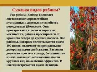 Пункт 1. Пункт 2. Пункт 3. Сколько видов рябины? Родрябина(Sorbus) включает