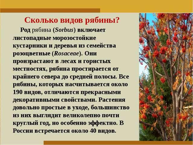 Пункт 1. Пункт 2. Пункт 3. Сколько видов рябины? Родрябина(Sorbus) включает...