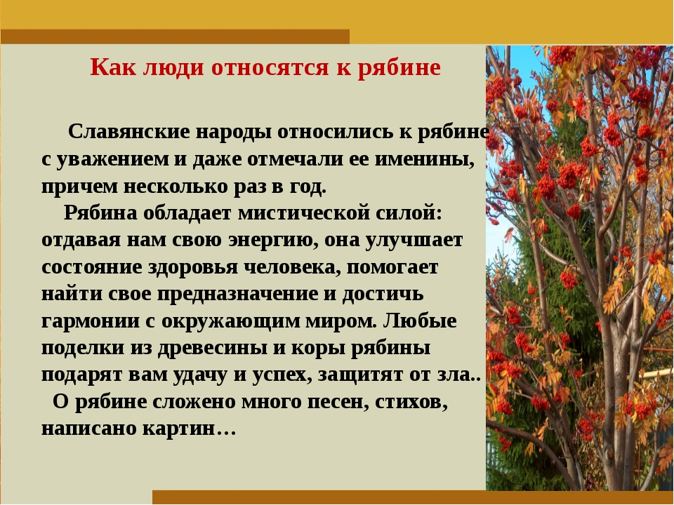 Пункт 1. Пункт 2. Пункт 3. Как люди относятся к рябине Славянские народы отно...
