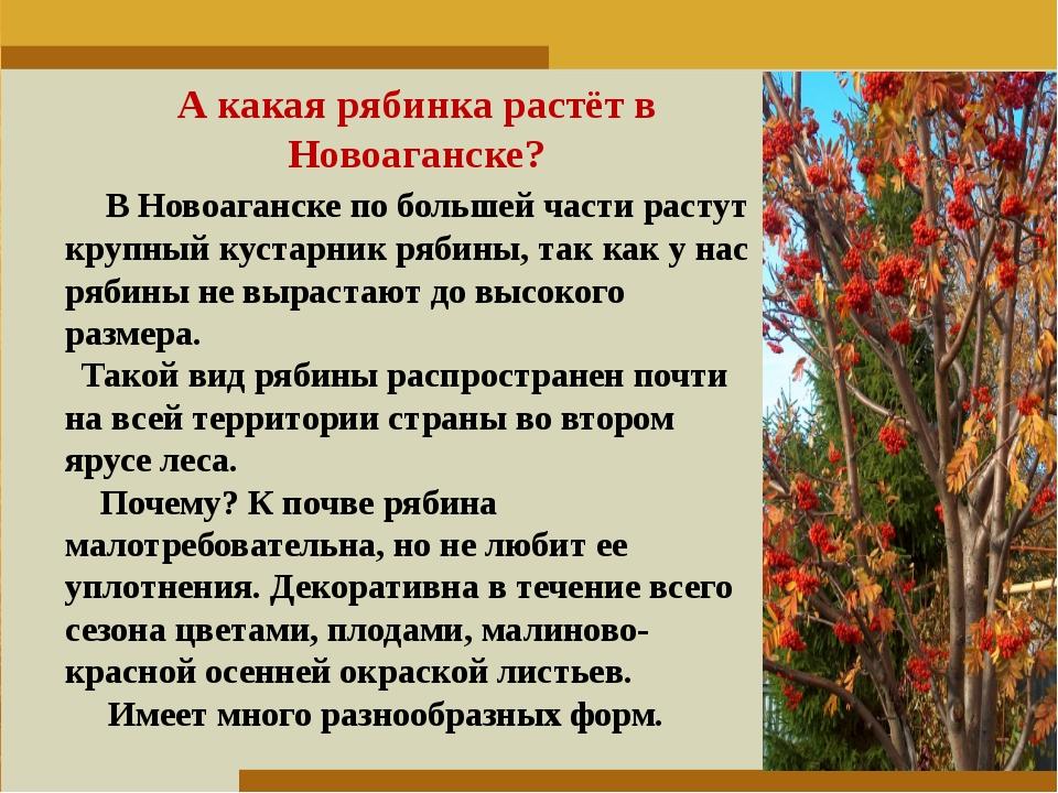 Пункт 1. Пункт 2. Пункт 3. А какая рябинка растёт в Новоаганске? В Новоаганск...