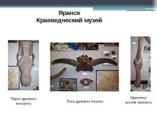 Оригинал костей мамонта Яранск Краеведческий музей Рога древнего бизона Череп