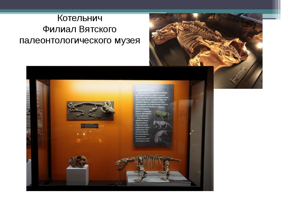 Котельнич Филиал Вятского палеонтологического музея