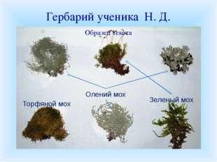 Гербарий ученика Н. Д. Торфяной мох Олений мох Зеленый мох К уроку вы должны