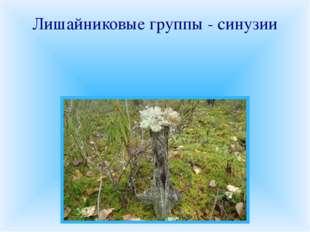 Лишайниковые группы - синузии В различных местообитаниях на скалах, почве, ст