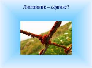 Лишайник – сфинкс? «Хаос природы», «убогая нищета растительности», «пионеры п