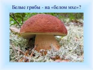 Белые грибы - на «белом мхе»? Правильно ли утверждение: «Белые грибы растут н