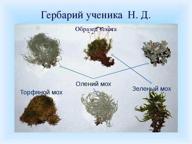Гербарий ученика Н. Д. Торфяной мох Олений мох Зеленый мох К уроку вы должны...