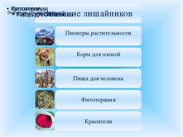 Значение лишайников в природе и жизни человека: Первопоселенцы; Корм для оле...