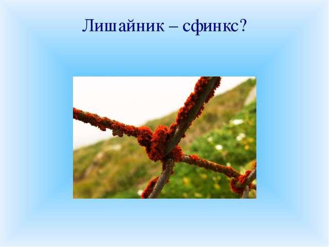 Лишайник – сфинкс? «Хаос природы», «убогая нищета растительности», «пионеры п...