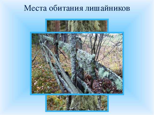 Места обитания лишайников Внимательно рассмотрите представленные фотографии м...