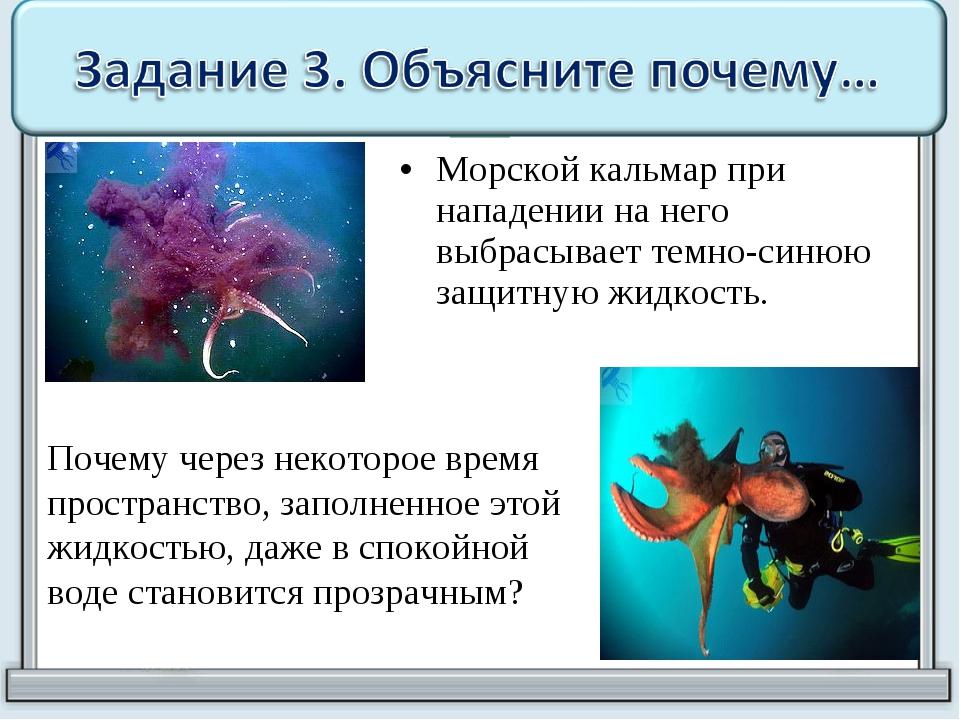 Морской кальмар при нападении на него выбрасывает темно-синюю защитную жидкос...