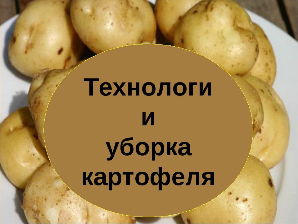 Технологии уборка картофеля