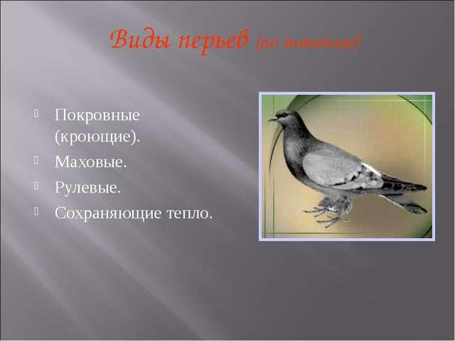 Виды перьев (по значению) Покровные (кроющие). Маховые. Рулевые. Сохраняющие...