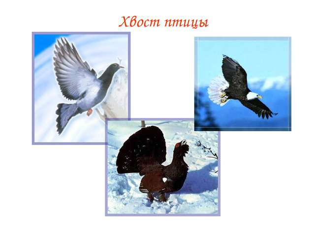 Хвост птицы