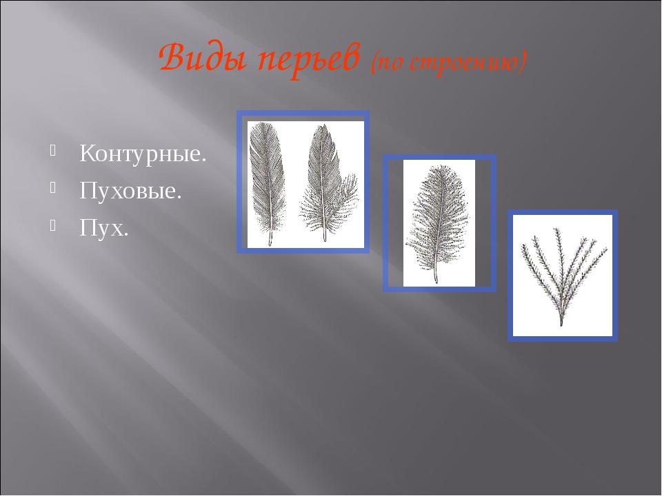 Виды перьев (по строению) Контурные. Пуховые. Пух.