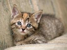 Коты - позитивные, милые, смешные #15. Котята (31 фото)