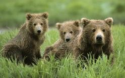 медведя Животные animals HD 290303638