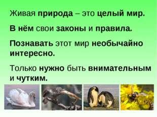 Живая природа – это целый мир. В нём свои законы и правила. Познавать этот ми