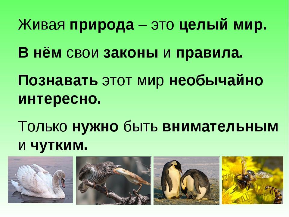 Живая природа – это целый мир. В нём свои законы и правила. Познавать этот ми...