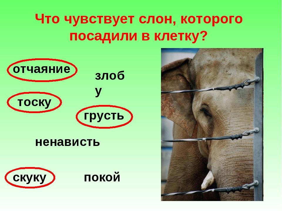 Что чувствует слон, которого посадили в клетку? отчаяние злобу тоску грусть н...
