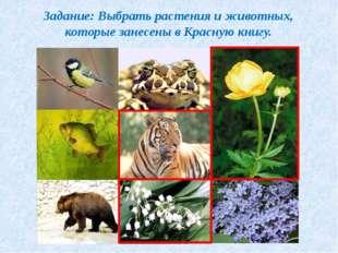 Задание: Выбрать растения и животных, которые занесены в Красную книгу.