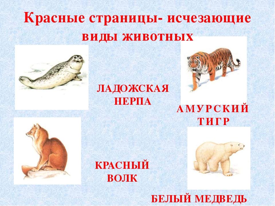 Красные страницы- исчезающие виды животных ЛАДОЖСКАЯ НЕРПА АМУРСКИЙ ТИГР КРАС...