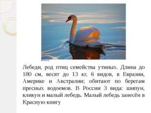 Лебеди, род птиц семейства утиных. Длина до 180 см, весят до 13 кг, 6 видов,