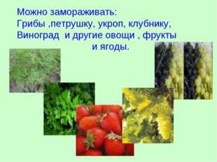 Можно замораживать: Грибы ,петрушку, укроп, клубнику, Виноград и другие овощи