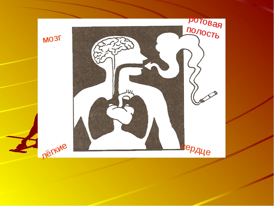 мозг ротовая полость сердце лёгкие