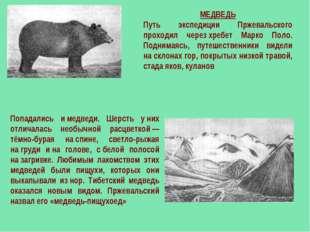 МЕДВЕДЬ Путь экспедиции Пржевальского проходил черезхребет Марко Поло. Подни