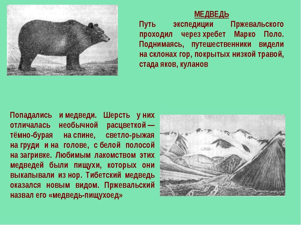МЕДВЕДЬ Путь экспедиции Пржевальского проходил черезхребет Марко Поло. Подни...