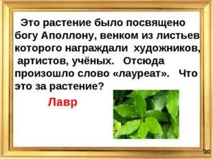 * Это растение было посвящено богу Аполлону, венком из листьев которого награ