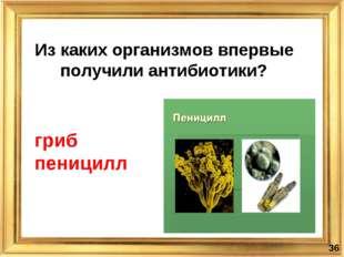 Из каких организмов впервые получили антибиотики? * гриб пеницилл