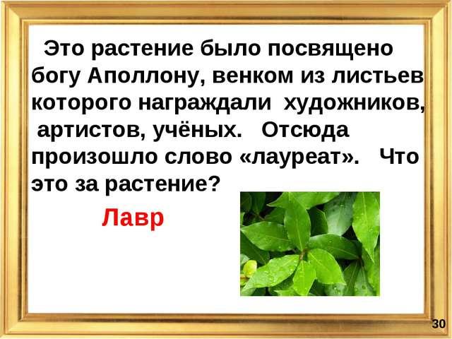 * Это растение было посвящено богу Аполлону, венком из листьев которого награ...