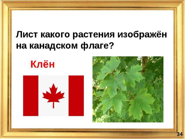Лист какого растения изображён на канадском флаге? * Клён