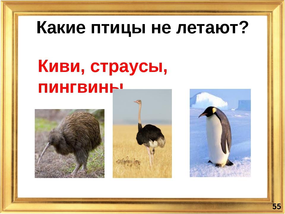 Какие птицы не летают? Киви, страусы, пингвины *