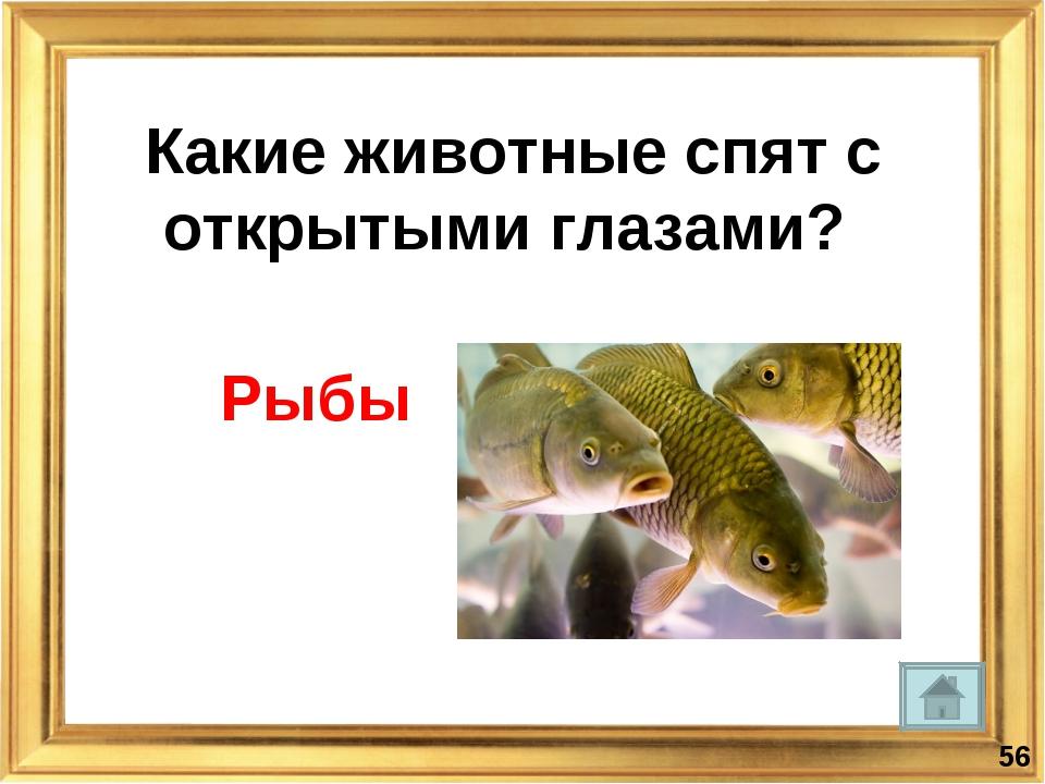 Какие животные спят с открытыми глазами? Рыбы *