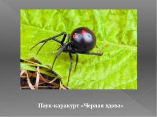 Паук-каракурт «Черная вдова»