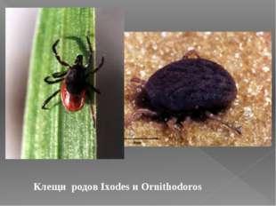 Клещи родов Ixodes и Ornithodoros
