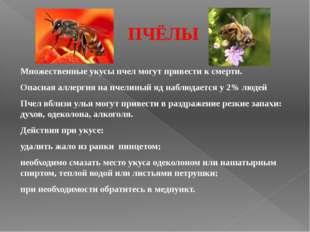 ПЧЁЛЫ Множественные укусы пчел могут привести к смерти. Опасная аллергия на п