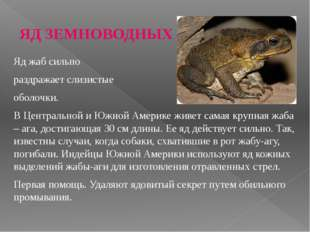 ЯД ЗЕМНОВОДНЫХ Яд жаб сильно раздражает слизистые оболочки. В Центральной и Ю