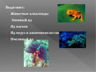 Выделяют: Животные алкалоиды Змеиный яд Яд пауков Яд медуз и кишечнополостн