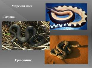 Морская змея Гадюка Гремучник