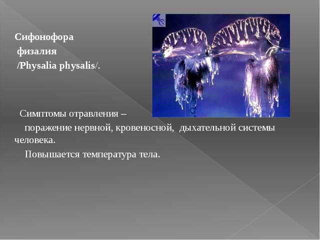 Сифонофора физалия /Physalia physalis/. Симптомы отравления – поражение нерв...