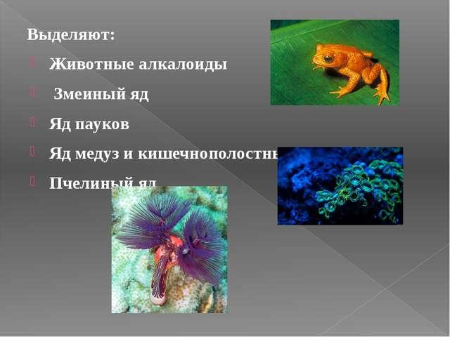 Выделяют: Животные алкалоиды Змеиный яд Яд пауков Яд медуз и кишечнополостн...