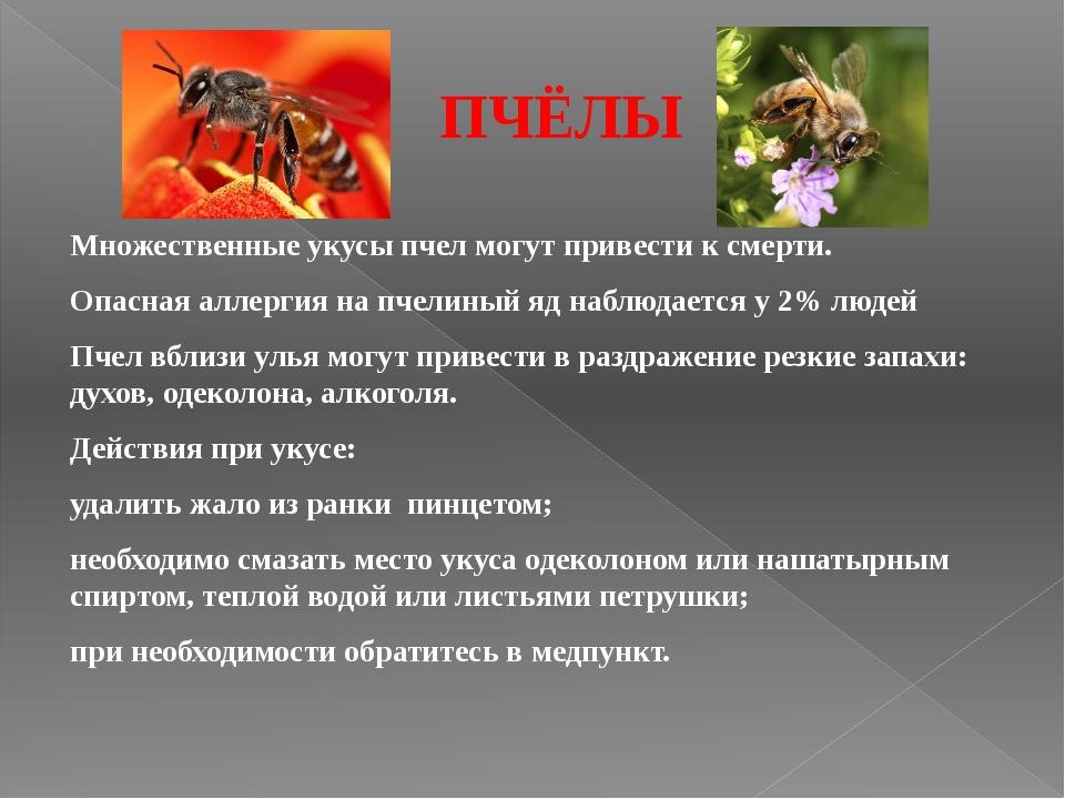 ПЧЁЛЫ Множественные укусы пчел могут привести к смерти. Опасная аллергия на п...