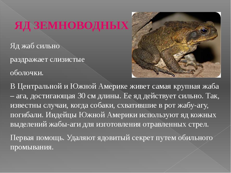 ЯД ЗЕМНОВОДНЫХ Яд жаб сильно раздражает слизистые оболочки. В Центральной и Ю...